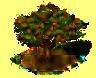 Mongongo-Baum.png