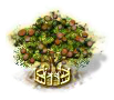 Mongongo-Baum xxl.png