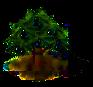 Olivenbaum.png