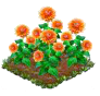 orangedahlia.png