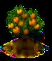 Orangenbaum.png