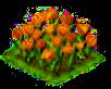 orangetulip_Icon.png