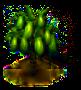 Papayabaum.png