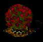 Pappelpflaumenbaum XL.png