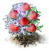 peach_Icon.png