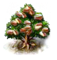 Pistazienbaum.png