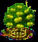 Pomelobaum xxl.png