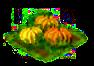 pumpkin_Icon.png