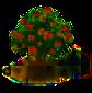 Rambutanbaum.png