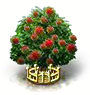 Rambutanbaum xxl.png