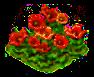 redpoppy_Icon.png