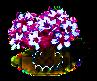 Sakura xl.png