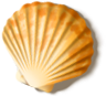 shell_01[1].png