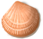 shell_02[1].png