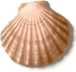 shell_03[1].png