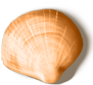 shell_04[1].png