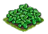 spinach_Icon.png