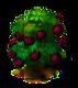 Sternapfelbaum.png