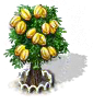 Sternfruchtbaum XL.png