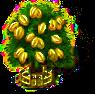 Sternfruchtbaum xxl.png
