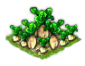 sugarbeet_Icon.png