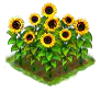 sunflower_Icon.png
