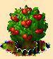 Surinamkirschbaum xl.png