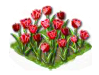 tulip_Icon.png