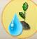 WasserEichensetzling.png