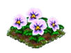 whitepansy.png