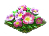 wildrose_Icon.png