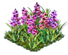 willowherb_Icon.png