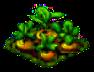yellowbeet.png