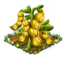 yellowpea.png