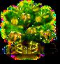 Ylang-Ylang-Baum xxl.png