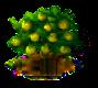 Zimtapfelbaum.png