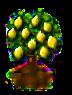 Zitronenbaum.png