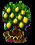 Zitronenbaum xl.png